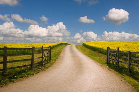 fense: Road through the raps field in a sunny day