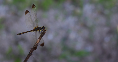 A dragonfly is sitting down. Stock Photo