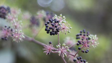 Wild flower fruit.