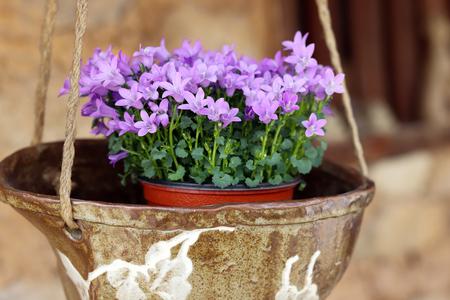 Purple flowers in pottery.