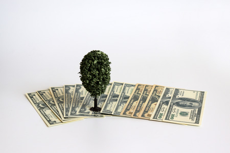 A miniature tree on the US dollar.