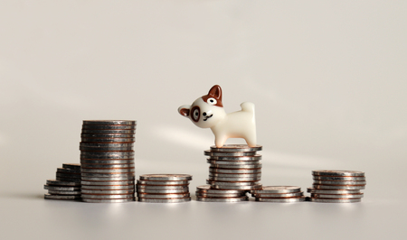The pile of coins and a miniature dog. Stock Photo