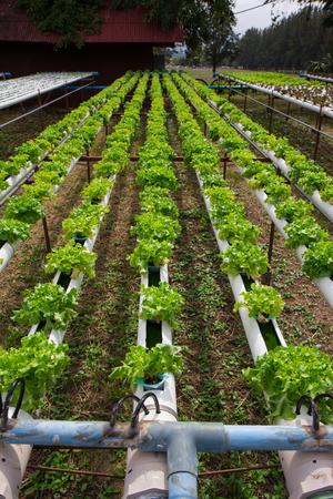 hydroponic Stock Photo