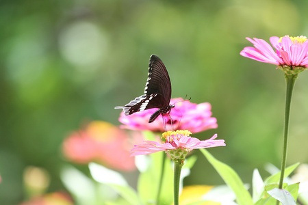 butterfly and colorful flower photo