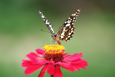 butterfly and colorful flower Stock Photo - 10641494