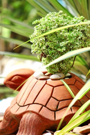 Potted plants, a turtle photo