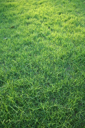 Green grass background Stock Photo - 10092106