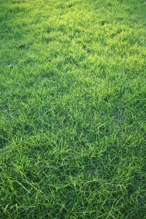 Green grass background Stock Photo - 10092106