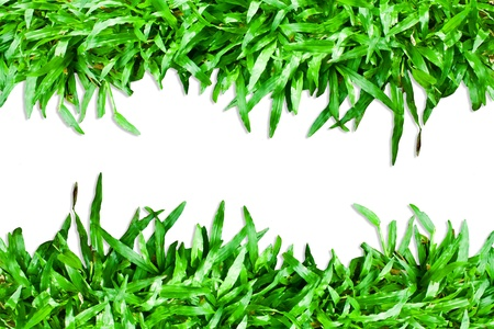 Grass green Stock Photo - 10739657