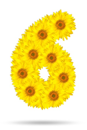 Number six made of sunflower  photo
