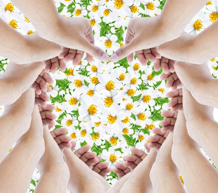 hands make hearts isolated on background flower daisy  photo