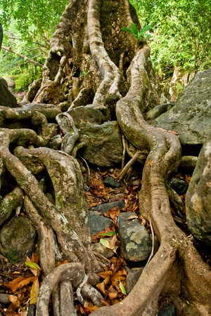 The roots of the trees are located on the Stone photo