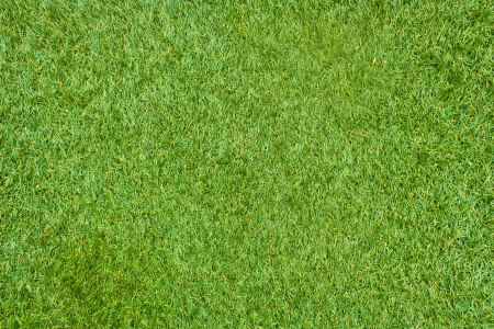 Fresh Green Grass artificial texture and surface  photo