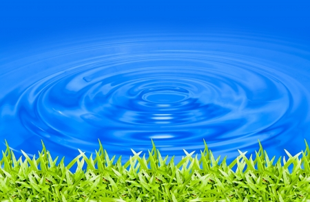 green grass in blue water  photo