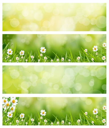 green bokeh abstract light background photo