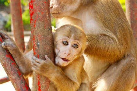 Mother Monkey holding her baby in zoo photo