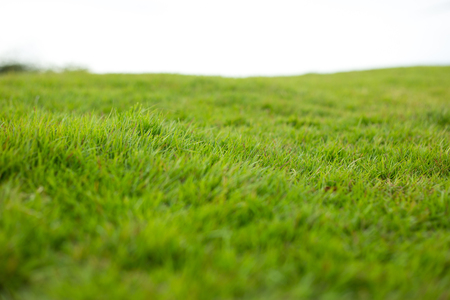 Green hill of grass field isolated on white background