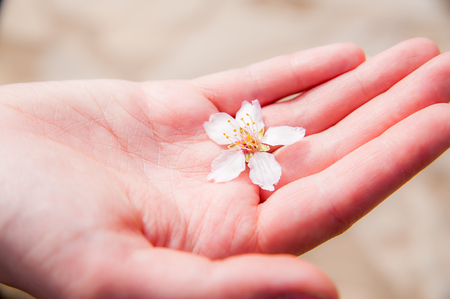 Pink hand holding beautiful blossoming plum flower. Maybe a gift for someone dear?