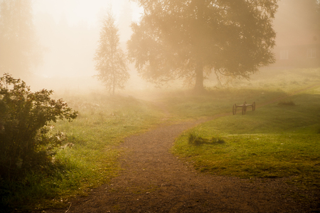 Misty morning with a big tree, a small path and warm light Stock Photo
