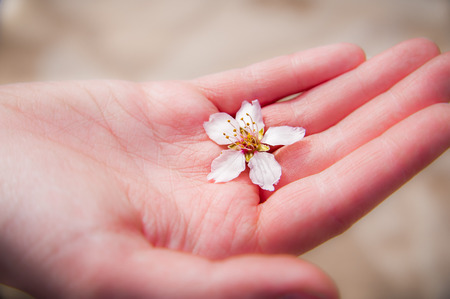 A pink hand is reaching out with a beautiful flower for valentines day. Stock Photo