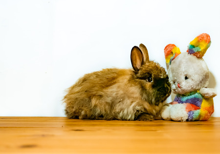 A toy easter buynny sitting next to a real angora rabbit kit with lots of space for text around.