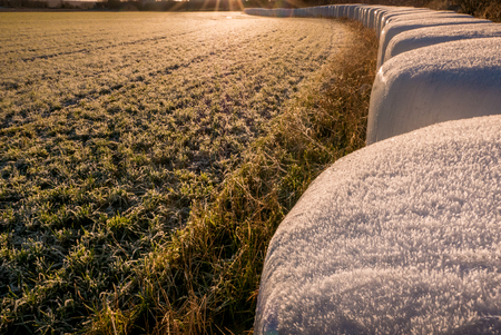 A long line of hay bales along the edge of a meadow in winter. Plenty of room for text