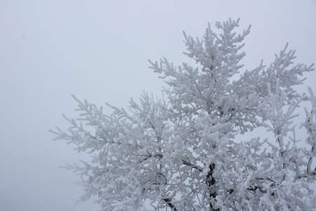 hoarfrost on the trees in a cold winter of North Dakota.
