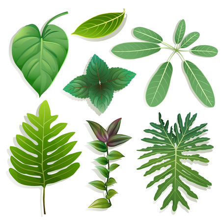 philodendron: Set of different shape of leaves on white background