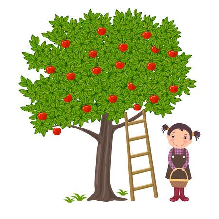 canastas de frutas: Una ilustración vectorial de una linda chica recogiendo manzanas del árbol