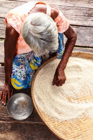winnowing: Old Asian woman, winnowing basket with rice, pick and choose rice seed