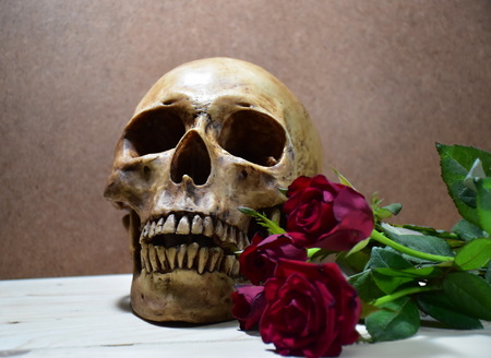 corpse flower: Still life with human skull and fresh roes flowers, love style
