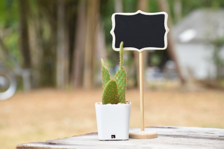 microdasys: beautiful opuntia microdasys cactus with black wooden sign on brown table, in garden, morning, sunlight