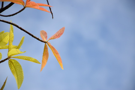 spring leaf: Beautiful top of new born leaves with blue sky for background