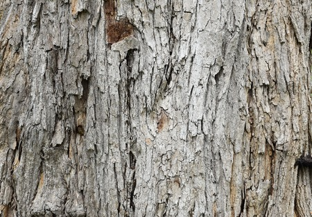 decaying: Decaying Wood Textured Background