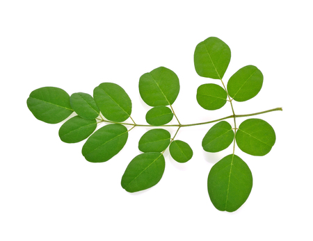 Moringa oleifera leaves isolated on white background Stock Photo