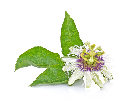passion fruit flower: passion flower isolated on white background