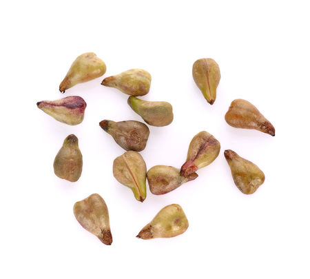 grape Seed isolated on white background