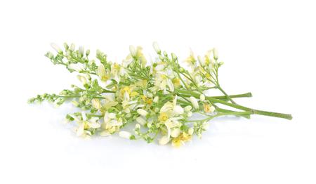 흰색 배경에 Moringa 꽃