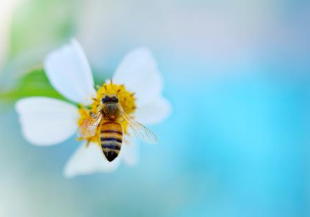 Bee op bloem Stockfoto
