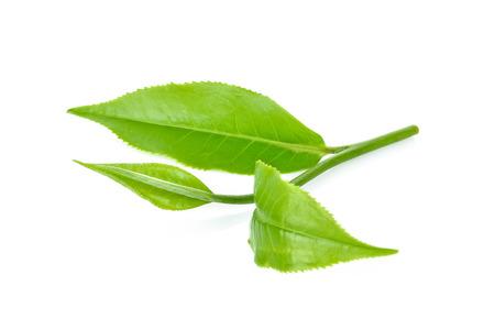 groen theeblaadje dat op witte achtergrond wordt geïsoleerd Stockfoto