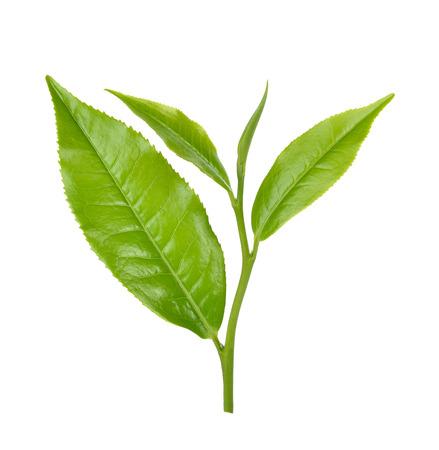 Groen theeblaadje op witte achtergrond
