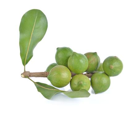 Macadamia noot op witte achtergrond wordt geïsoleerd die.