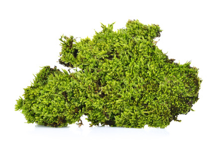 Green moss  on a white background