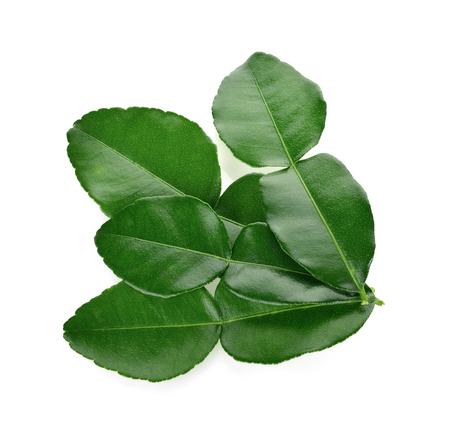 Kaffir lime leaves. isolated on white backgroun Stockfoto