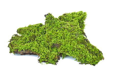 Green moss on white background