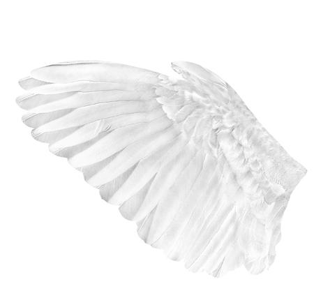 Pinion on the sprawling white