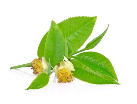 Groene thee blad geïsoleerd op wit Stockfoto - 90529609