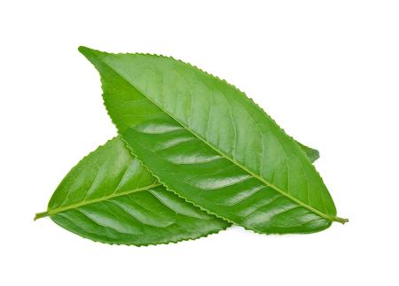 Groen theeblaadje dat op witte achtergrond wordt geïsoleerd Stockfoto - 90529613