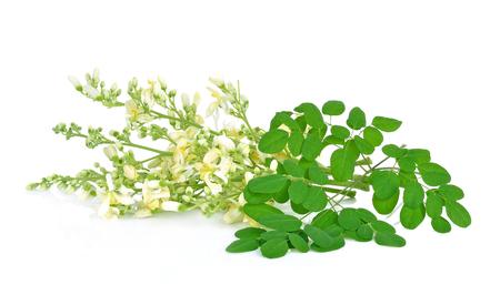 Moringa flowers on a white background