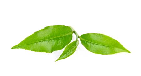 Groene thee blad geïsoleerd op wit Stockfoto - 90529492